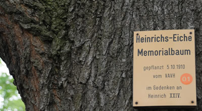 Memorialbaum, Heinrichseiche in Reichenfels - Hohenleuben