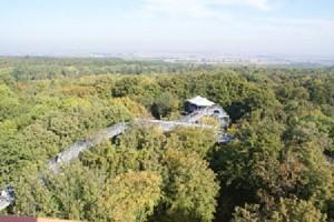 Baumkronenpfad mit Blick auf das Thüringer Becken